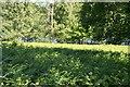 TQ6327 : Bracken with Wadhurst Park Lake beyond, Batt's Wood by N Chadwick