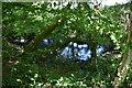 TQ6327 : Pond, Batt's Wood by N Chadwick