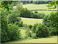 TQ1351 : Polesden Lacey - Dry Valley by Colin Smith