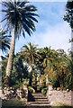 SV8914 : Tresco Abbey Garden by Des Blenkinsopp