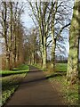 SO8455 : Avenue of trees on Pitchcroft by Philip Halling