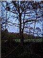 TF0820 : The twin oak by Bob Harvey