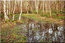 NH5857 : Swamp in Drummondreach Oak Wood by Julian Paren