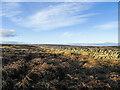 NZ0343 : Dead bracken beside dry stone wall. by Trevor Littlewood