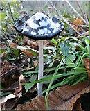 TQ9961 : Fungus in Bysing Wood, Faversham by pam fray