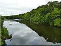 NJ9409 : River Don downstream of the Brig O'Balgownie by Stephen Craven