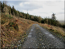 S4028 : Forest Track by kevin higgins