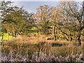 SD7908 : Scrubland behind Rothwell's Bridge by David Dixon