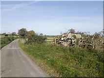 SU5625 : Ash dieback devastation in Holden Lane by Peter Facey