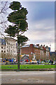 SJ8498 : Tree of Remembrance, Piccadilly Gardens by David Dixon
