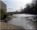 SE3655 : Weir and old mill on the River Nidd, Knaresborough by habiloid