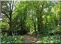 TQ5500 : Path in Friston Forest, Near Jevington by PAUL FARMER