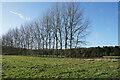 SU5792 : Line of trees near Little Wittenham Wood by Bill Boaden