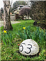 TQ2450 : Early daffodils, West Street by Ian Capper