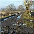SK6440 : Farm track on Stoke Bardolph estate by Alan Murray-Rust