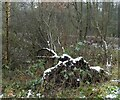 SJ9594 : Fallen tree at Swain's Valley by Gerald England