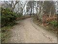 TQ5536 : Track through heathland at Broadwater Warren Nature Reserve by Marathon
