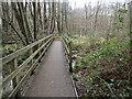 TQ5436 : Walk through the Wet Woodland in Broadwater Warren Nature Reserve by Marathon