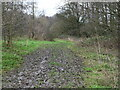 TG2931 : Muddy path Pigney's Wood by David Pashley