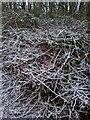 TF0820 : Winter die-back by Bob Harvey