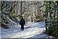 NT2640 : Track below Janet's Brae, Peebles by Jim Barton