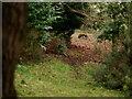 TQ3563 : Fox at Heathfield by Peter Trimming