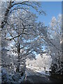 SP3350 : Unexpected April snow by Marika Reinholds