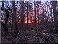 TF0820 : Dawn in fire by Bob Harvey
