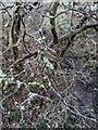 TF0820 : Lichens by Bob Harvey