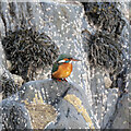 J5082 : Kingfisher, Bangor by Rossographer
