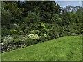 SX9150 : Garden border at Coleton Fishacre by Steve Daniels