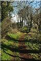 SX8457 : Path in Hoyle Copse by Derek Harper