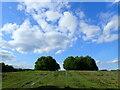 TQ4526 : Ashdown Forest by Phil Brandon Hunter