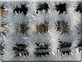 NH6454 : Frost on the chicken run, Marowan, Black Isle by Julian Paren