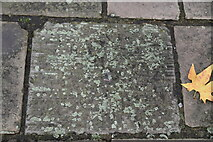 TQ3081 : Ripple marks in Haslingden Beds, Bloomsbury Square by N Chadwick