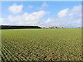TG2728 : Winter Wheat Crop by David Pashley