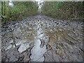 SO7843 : Muddy footpath by Philip Halling