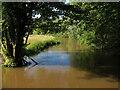TL4354 : River Cam from Brasley Bridge by Hugh Venables