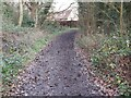 TQ5250 : Path through the Woods by John P Reeves