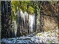 NY4654 : Icicles by Adrian Taylor