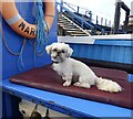 SX9781 : Ship's dog by Marika Reinholds