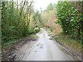 TG3024 : Road through Gothic Wood by David Pashley