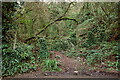SX8963 : Gate by Cockington Lane by Derek Harper