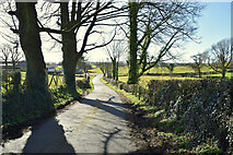 H4851 : Shantonagh Road, Tullyquin Glebe by Kenneth  Allen