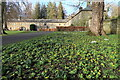 NZ0284 : Winter Aconites, Wallington Courtyard by Andrew Curtis