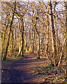 TQ5682 : Woodland Path, Belhus Woods Country Park, February  by Roger Jones