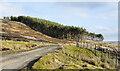 NY9349 : Plantation above north side of Beldon Burn by Trevor Littlewood