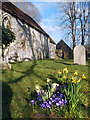 SU6086 : Spring Flowers in North Stoke Churchyard by Des Blenkinsopp