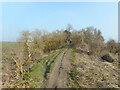 SU6287 : Ridgeway on Grim's Ditch by Des Blenkinsopp