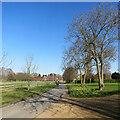 TL4446 : Thriplow: daffodils and a skateboarder on Church Street by John Sutton